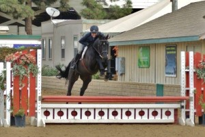 Black hunter gelding in cA