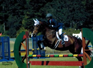 oldenburg allround mare