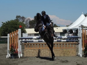 8 yr old 1.40 jumper gelding in CA