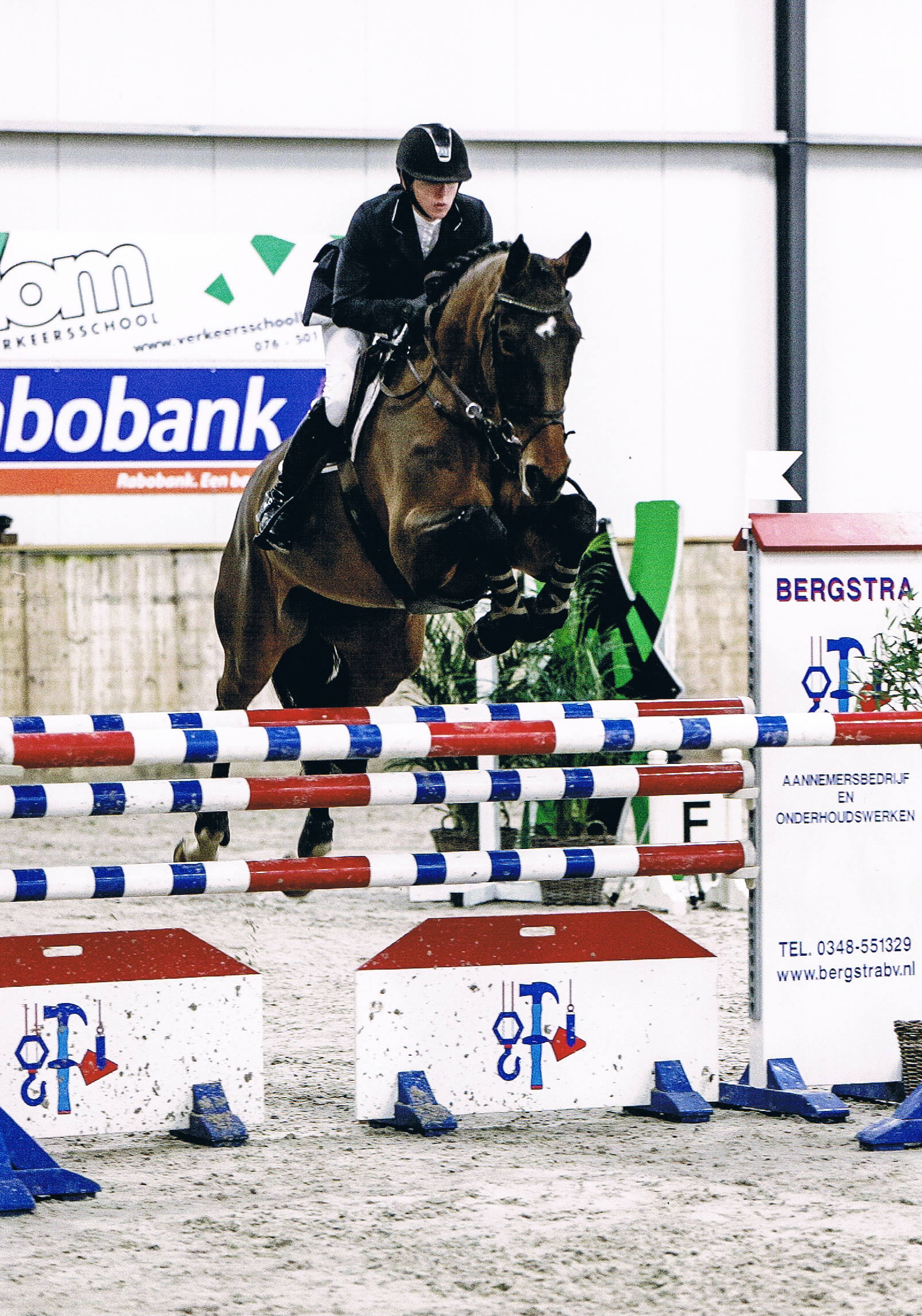 Jumping Horses For Sale Holland Hunter And Jumper Horses