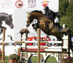 Dutch GP jumper gelding